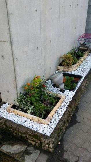 春・秋季節の花を植えかえてます